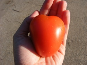 frest-tomato